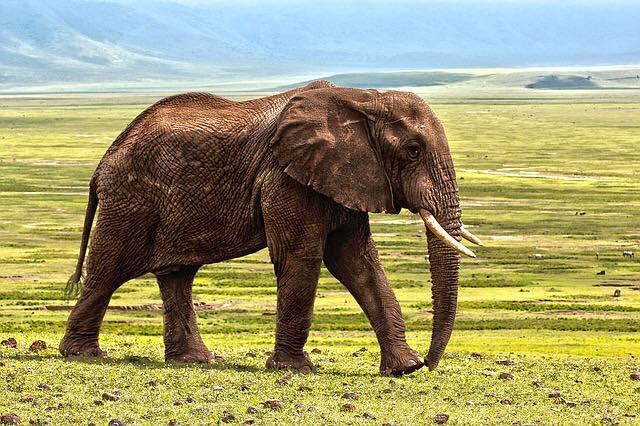Connaissez vous la légende des aveugles et de l'éléphant ?